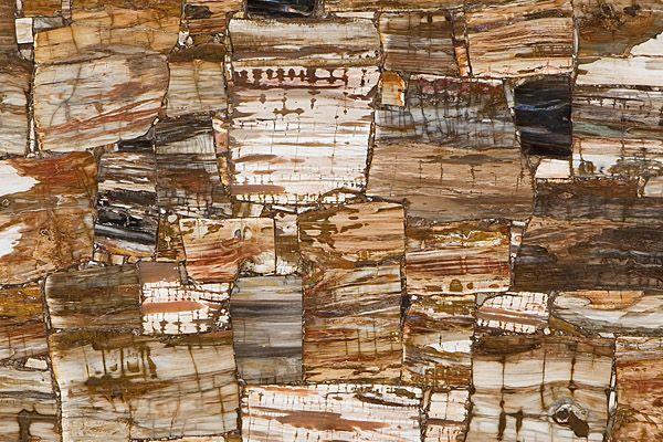 Caesarstone 8331 Petrified Wood Classic Caesarstone Caesarstone